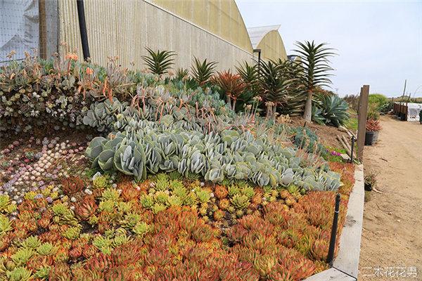 美国加州多肉植物大棚-29