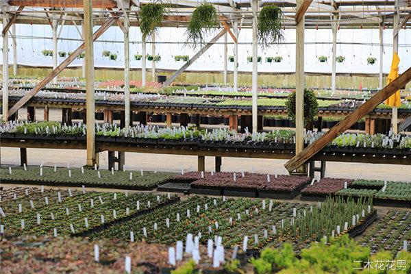 美国加州多肉植物大棚-58
