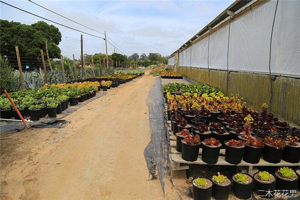 美国加州多肉植物大棚-74