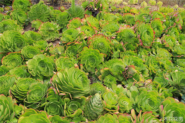 美国加州多肉植物大棚-79