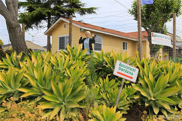 美国加州多肉植物大棚-80