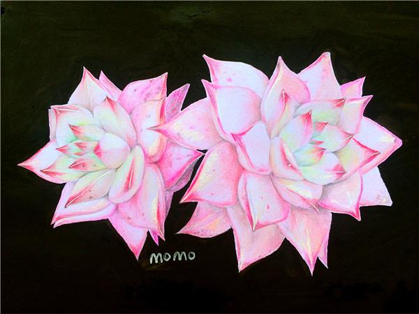 多肉植物彩铅画(3)