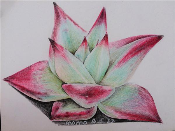 多肉植物彩铅画(5)