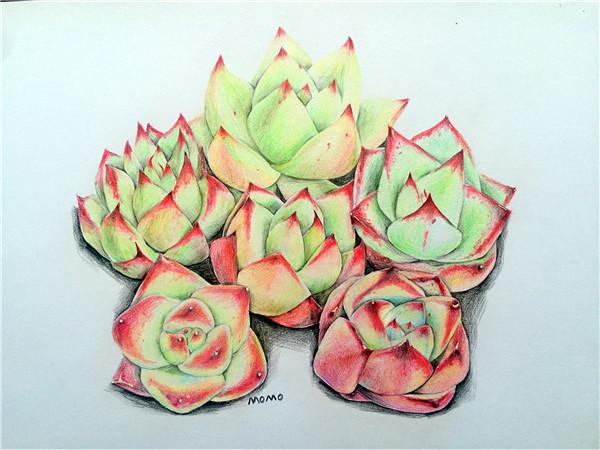 多肉植物彩铅画-多肉联萌