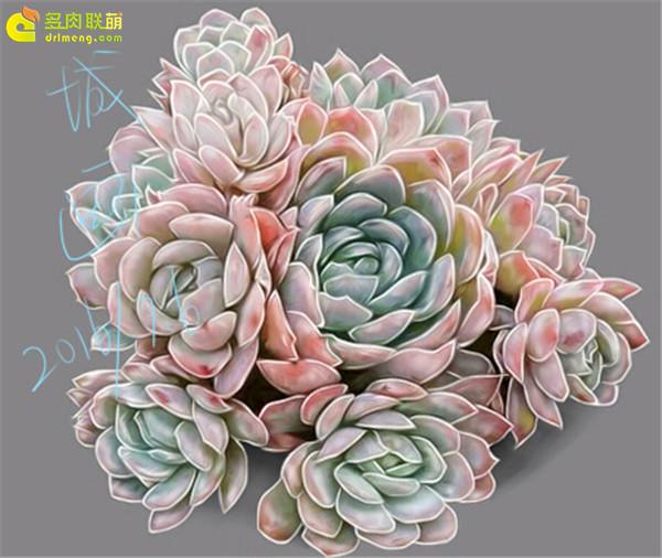 数位板画多肉植物-(1)