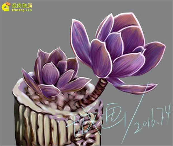 数位板画多肉植物-(2)