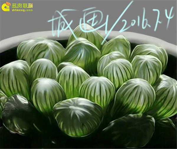 数位板画多肉植物-(4)