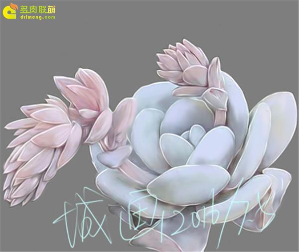 数位板画多肉植物-(6)