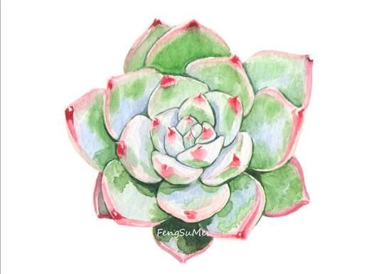 养多肉植物,画水彩画-多肉联萌