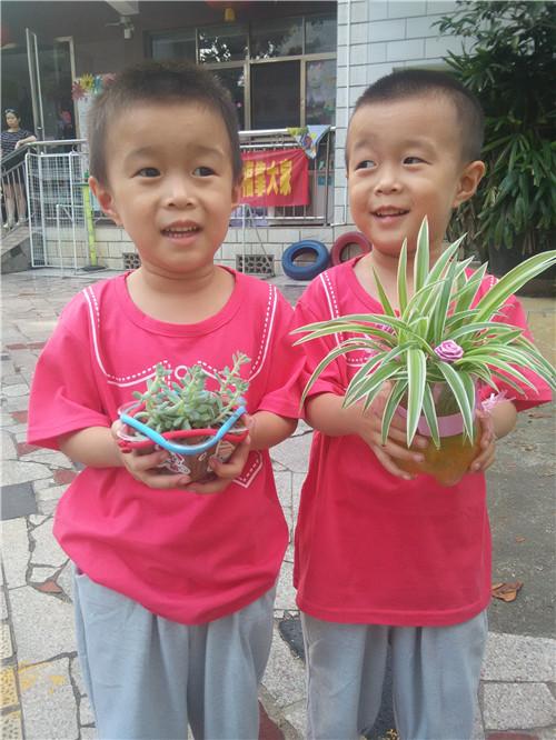 幼儿园里的多肉植物-25