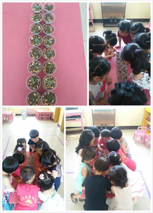 幼儿园里的多肉植物-4