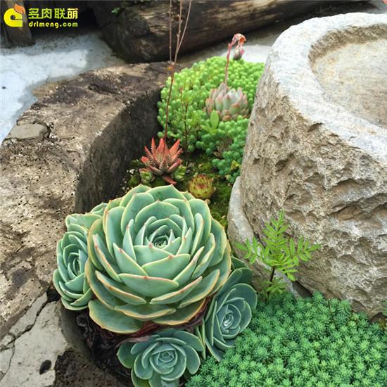 云南,夏天的多肉植物-1