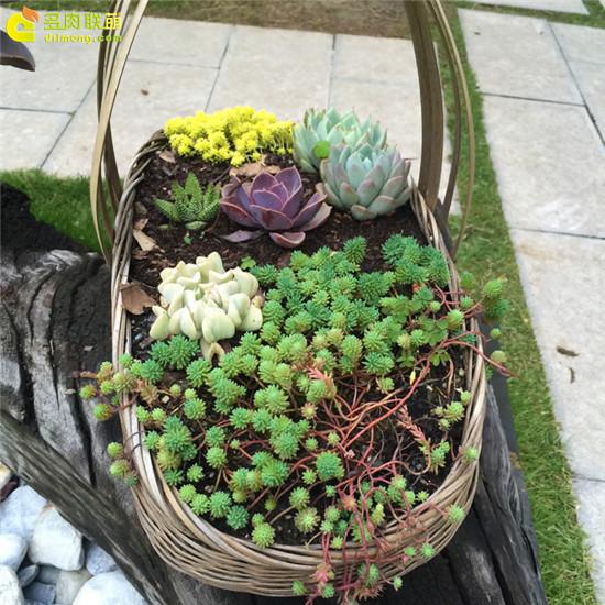 云南,夏天的多肉植物-8