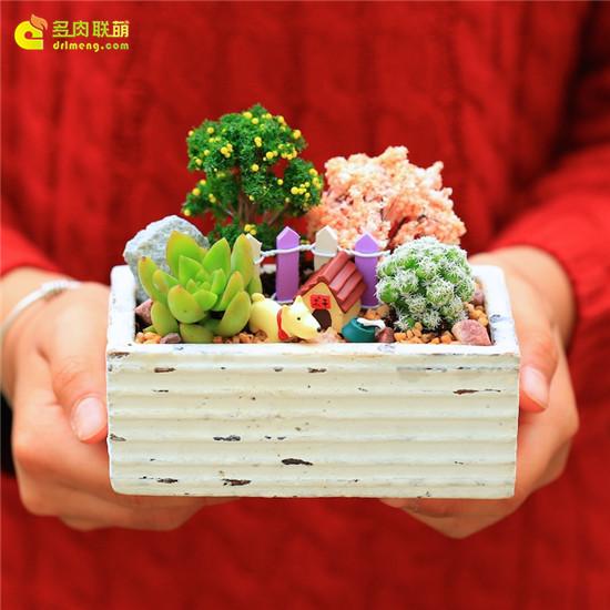 七夕情人节可以送的多肉礼物-15