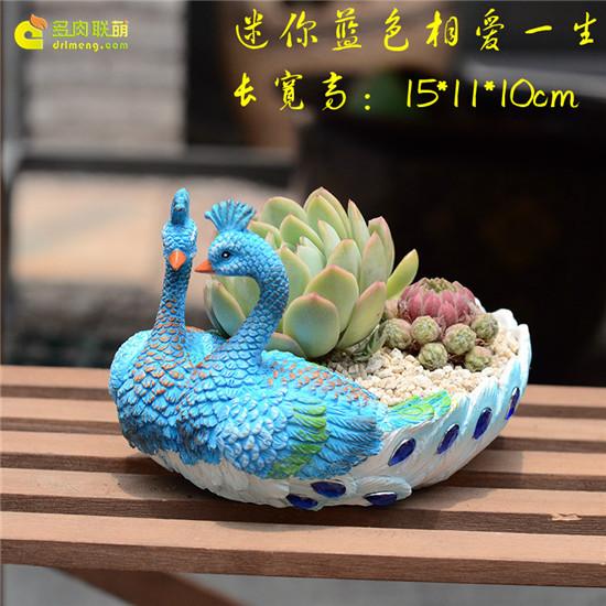 七夕情人节可以送的多肉礼物-8