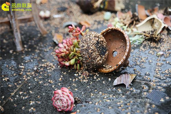 夏天多肉植物真的养不死吗?24