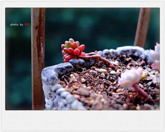 云南春天时的多肉植物-27