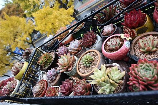 秋天的多肉植物-15