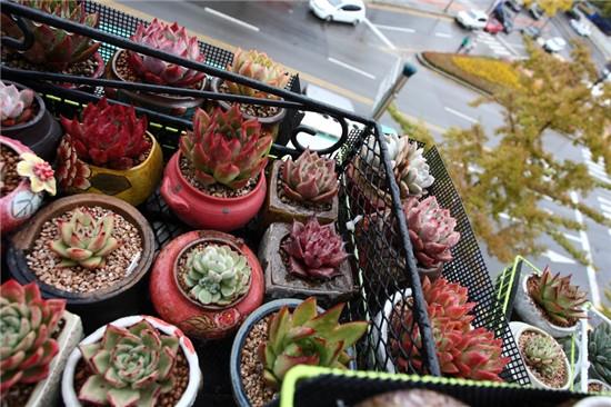 秋天的多肉植物-16