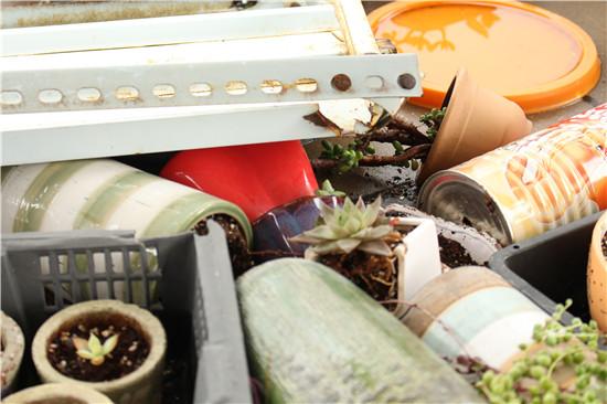 台风来了,多肉植物怎么办-14