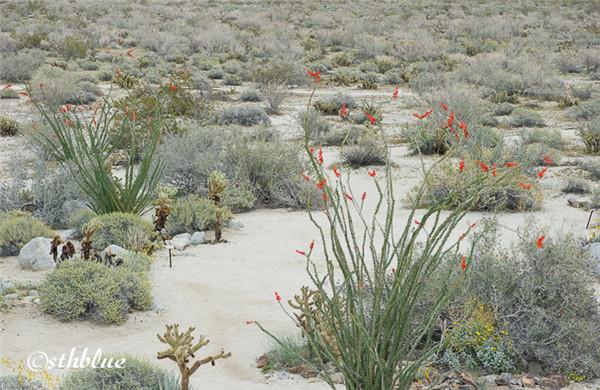 安沙波列哥沙漠州立公园美景-1
