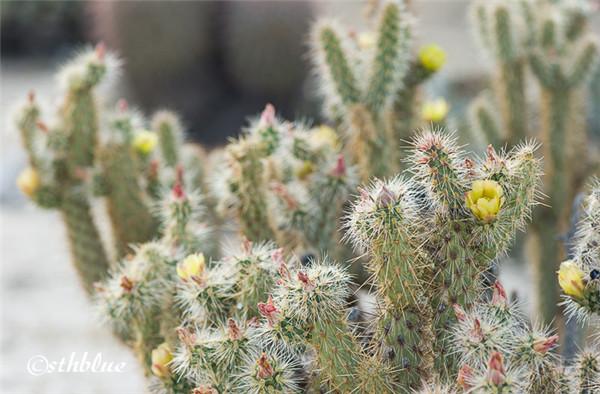 安沙波列哥沙漠州立公园美景-16