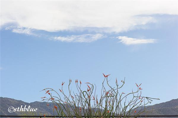 安沙波列哥沙漠州立公园美景-19