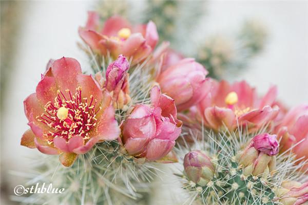 安沙波列哥沙漠州立公园美景-2