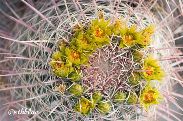 安沙波列哥沙漠州立公园美景-25