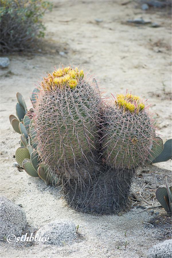 安沙波列哥沙漠州立公园美景-26