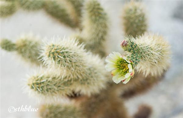 安沙波列哥沙漠州立公园美景-27