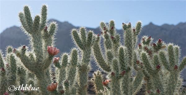 安沙波列哥沙漠州立公园美景-3