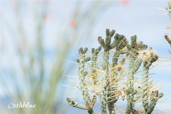 安沙波列哥沙漠州立公园美景-32