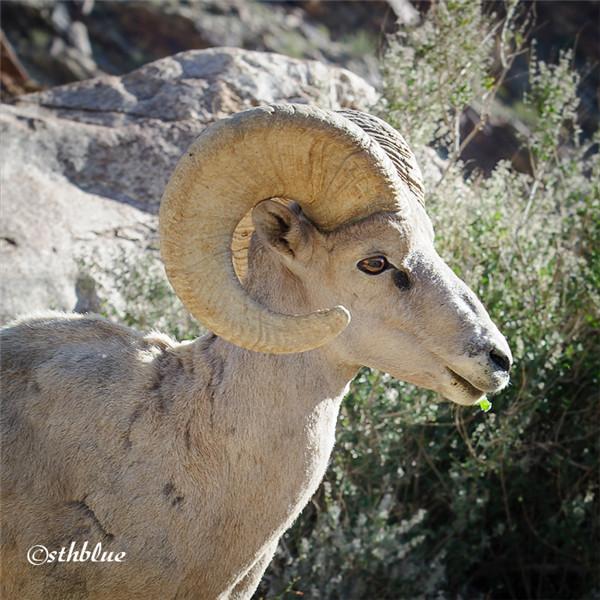 安沙波列哥沙漠州立公园美景-41