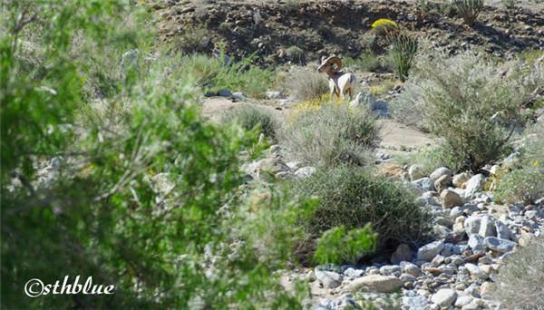 安沙波列哥沙漠州立公园美景-42