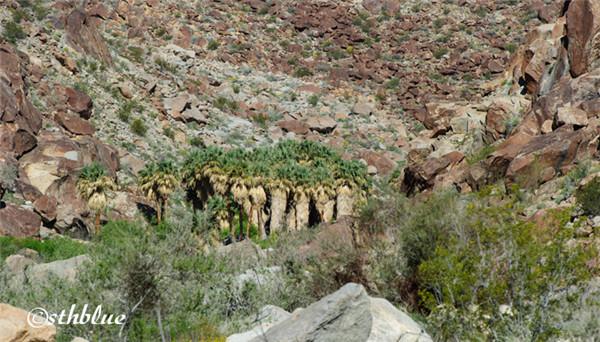 安沙波列哥沙漠州立公园美景-45