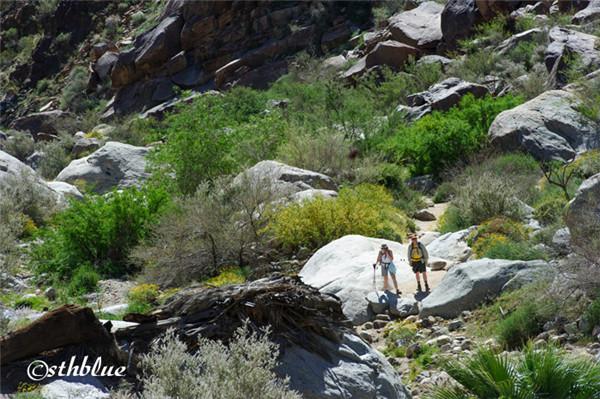 安沙波列哥沙漠州立公园美景-46