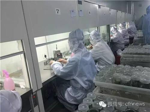 上海大地种苗的专业组培室内,工人正在给多肉分瓶