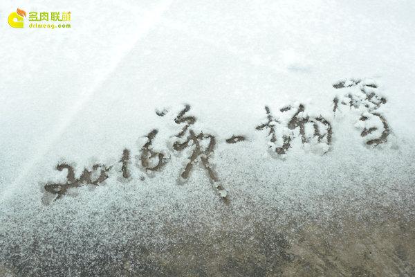 陕西西安经历冰雪的多肉植物-1