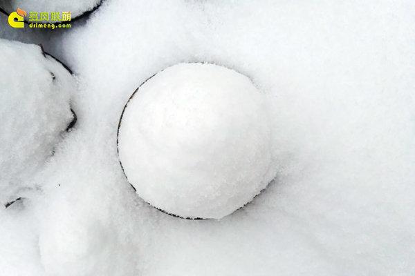 陕西西安经历冰雪的多肉植物-14