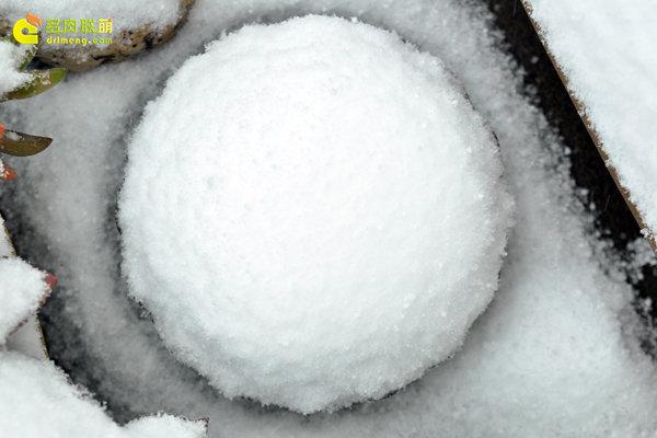 陕西西安经历冰雪的多肉植物-7