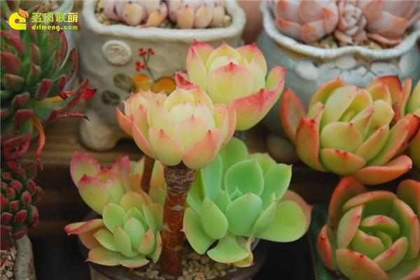 韩国多肉植物大棚--13