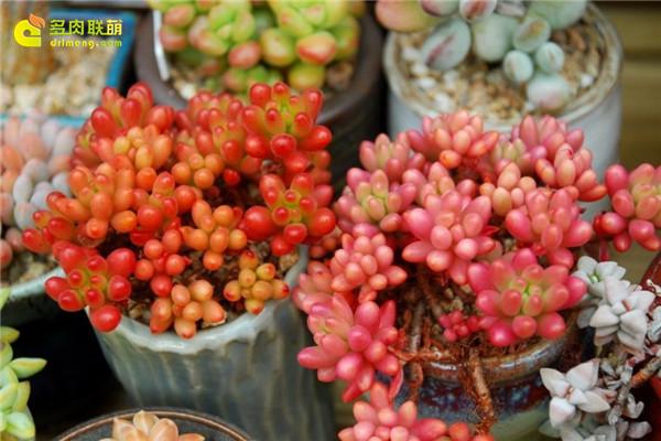 韩国多肉植物大棚--14