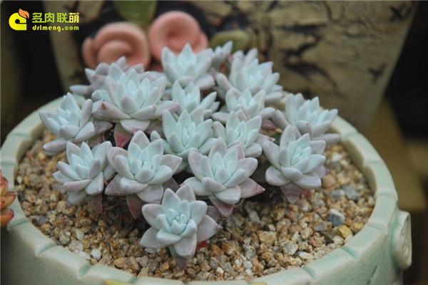 韩国多肉植物大棚--15