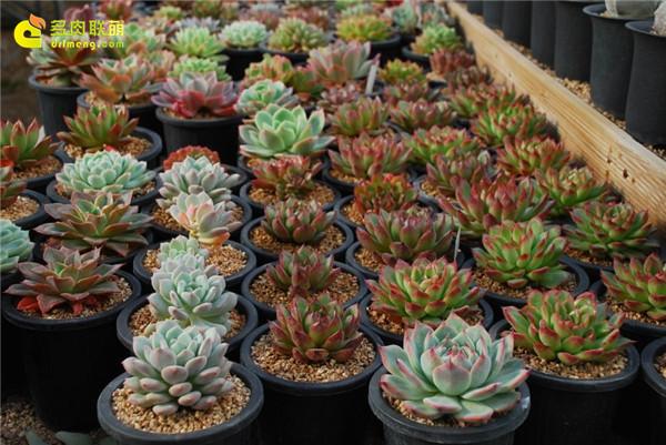 韩国多肉植物大棚--3