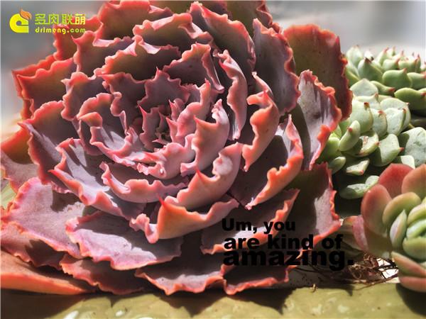 多肉的绿野仙踪-1