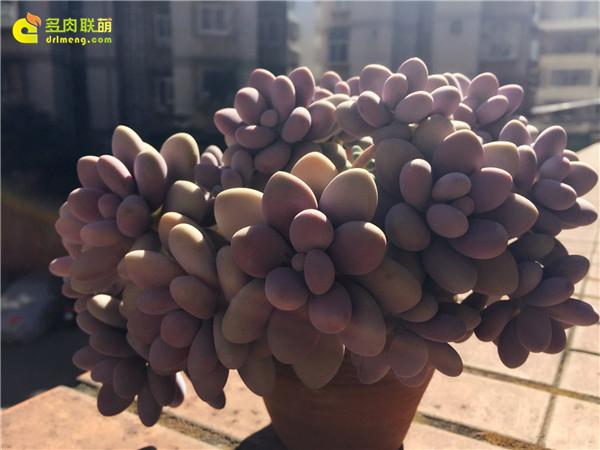 超美的群生桃蛋-3