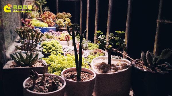多肉花园夜拍