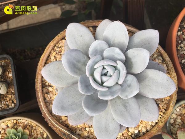 广州养好的多肉植物-5