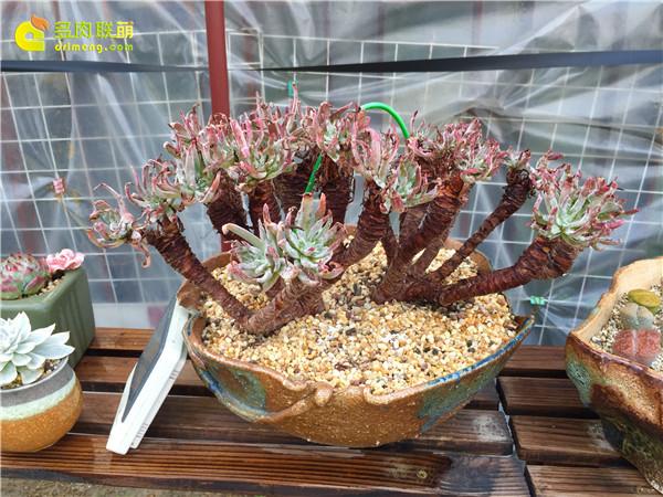广州养好的多肉植物-1